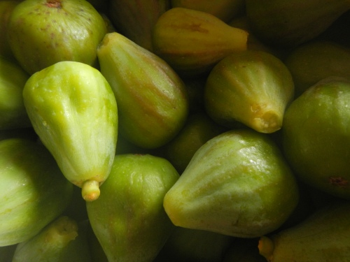 Late Figs